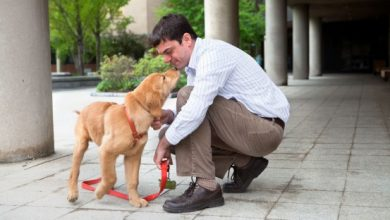 Photo of Dog DNA startup announces $75M in venture funding