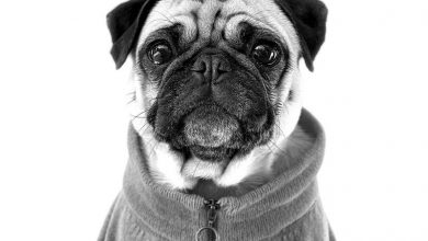 Photo of Apple shares new Shot on iPhone campaign featuring pet portraits | Joe Wituschek